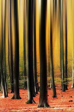 Abstracte herfstbomen in het Speulderbos van Dennis van de Water