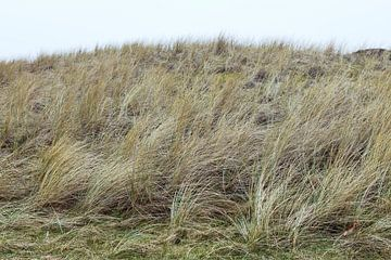 Duinen, Hargen aan Zee  Noord - Holland van Jeroen van Esseveldt