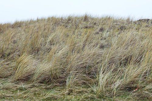 Duinen, Hargen aan Zee  Noord - Holland