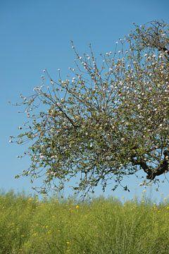 Bloeiende appelboom met vogeltje van Remke Spijkers