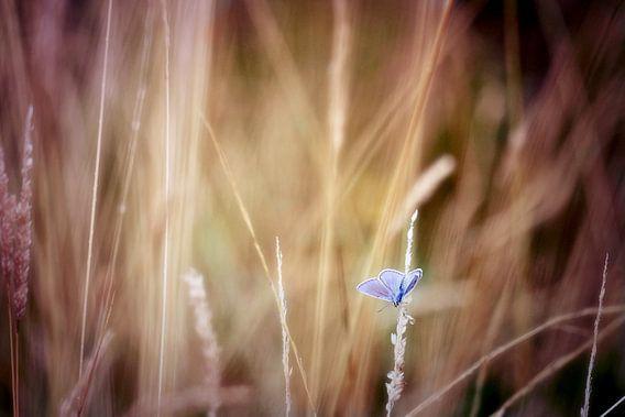 blue spot.....