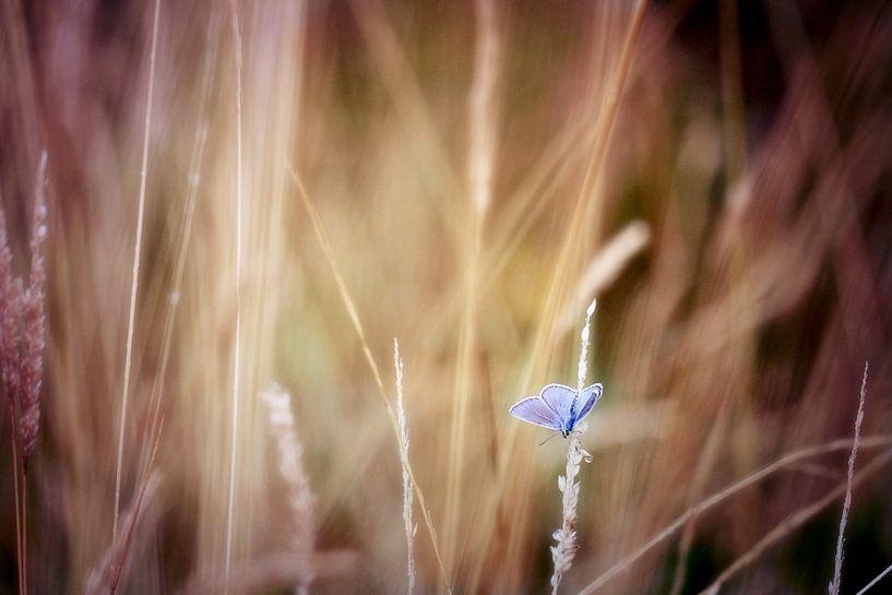 blue spot..... van Els Fonteine