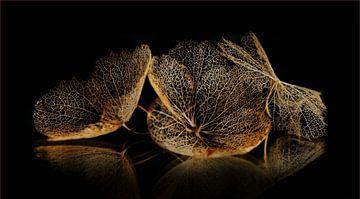 Hortensiabloemen van