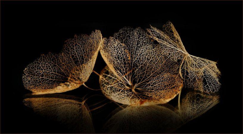 Hortensiabloemen van C.A. Maas