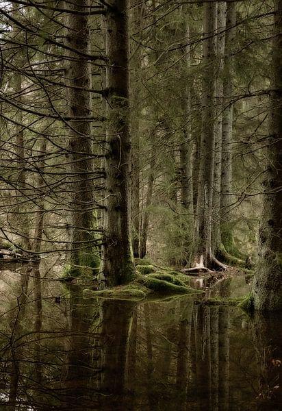 Reflectie  van Sran Vld Fotografie