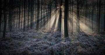 Winter im Wald von Egon Zitter
