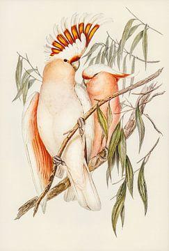 Rosenmaulwürfe Kakadus ca. 1804-1841 von Rudy en Gisela Schlechter