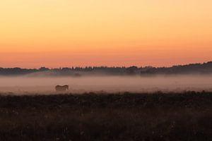 Eenzame pony in de mist van Jan Dolfing