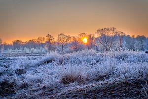 Arcen Wellerlooi Maasduinen Winterlandschaft