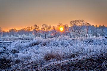 Arcen Wellerlooi Maasduinen Winterlandschaft von Twan van den Hombergh