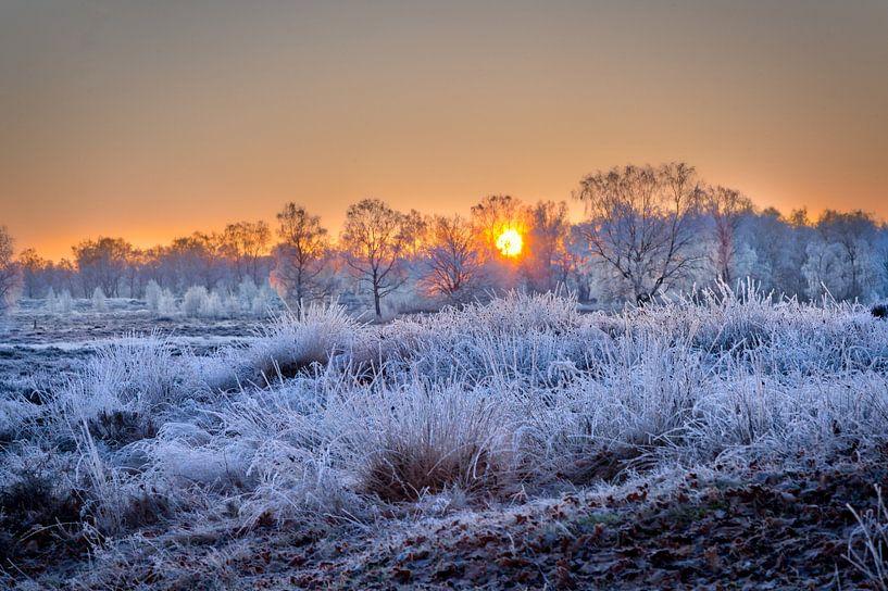 Arcen Wellerlooi Maasduinen Winterlandschap van Twan van den Hombergh