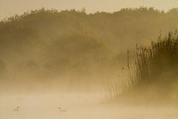 Futen paar in landschap van Menno van Duijn