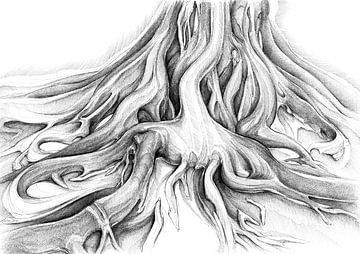 Ficus Macrophylla II