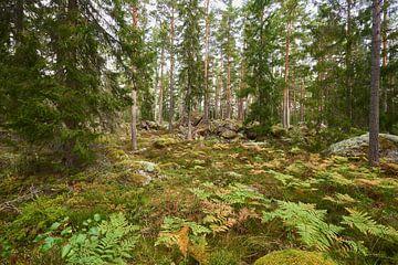 Schweden 278 von Geertjan Plooijer
