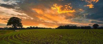 Maisveld van Peter Heins