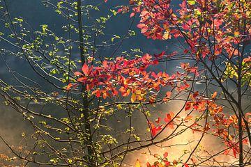Autumnmood | Twickel Delden (5) von Rob van der Pijll
