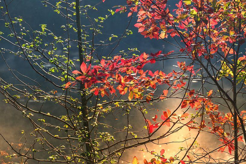 Autumnmood   Twickel Delden (5) van Rob van der Pijll