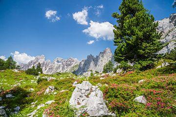 Alpenroosjes in bloei II van Coen Weesjes