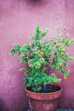 Granaatappelboom van Patrycja Polechonska