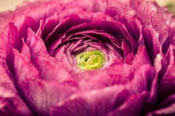 De groene kern, een zomerbloeier van Sven Wildschut