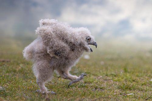 Kijk mam, ik kan ook vliegen!
