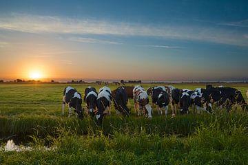 Zonsondergang met koeien in de polder van Martin Bredewold