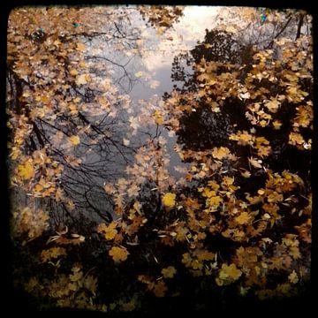 Bladeren in het water II van Kuba Bartyński