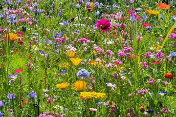 Bloemenveld van Kurt Krause