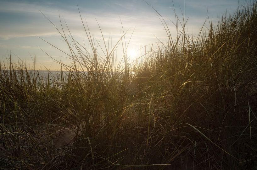 Tranquility dune van Arjen Roos