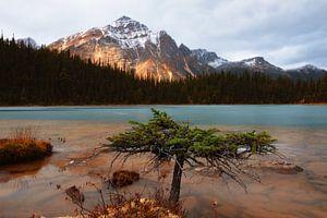 Cavell Lake, Jasper National Park, Alberta, Canada van Colin Bax