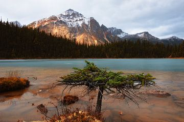 Cavell Lake, Jasper National Park, Alberta, Canada von Colin Bax