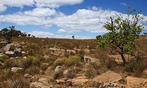 Wandelpad door de natuur in Zuid-Afrika