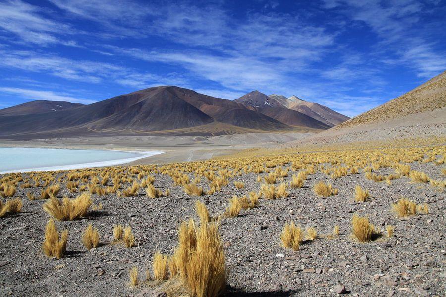 Hoog in de Andes