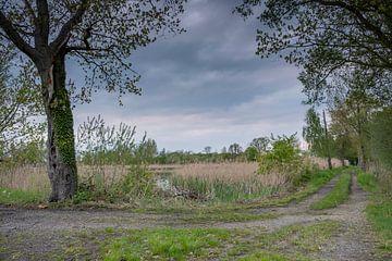 Pad in het vijvergebied bij Mönau in Opper-Lausitz van Holger Spieker