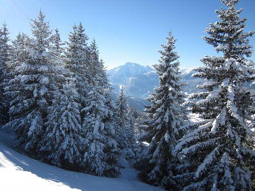 Uitzicht door de besneeuwde bomen van