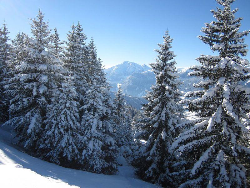 Uitzicht door de besneeuwde bomen