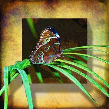 Vlinder | Morpho van Dirk H. Wendt