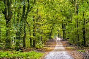 De weg van het Speulderbos