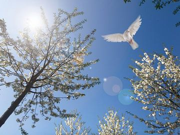 lente en de duif