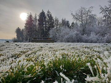 Bevroren wereld von Sharida Mohaboe