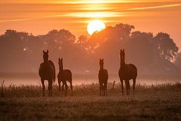 Paarden bij mistige zonsopkomst van Yorben  de Lange