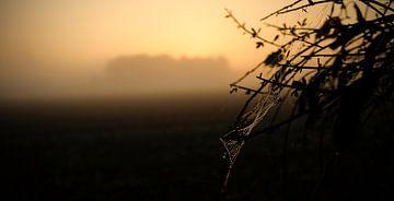 spinnen web van Karin vanBijleveltFotografie