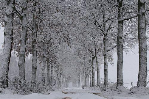 Sneeuw, wind en kou in de polder. van