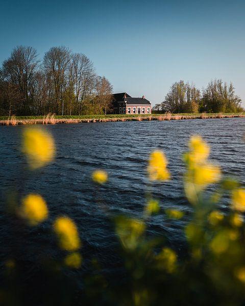Boerderij Eemskanaal Zuidzijde, koolzaad van Harmen van der Vaart