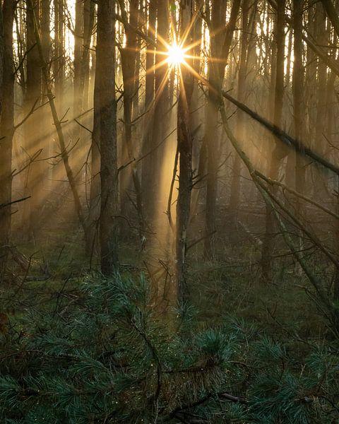 zonneharpen van Hetwie van der Putten