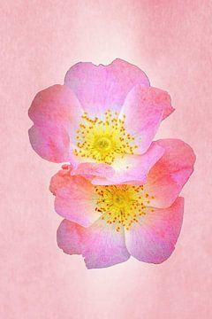 Schöne Blumen von Alexandra Kleist