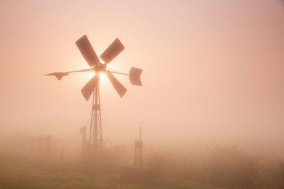 Molentje in de mist