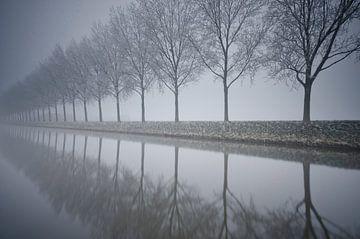 Mistige rij met bomen  von Remco Swiers
