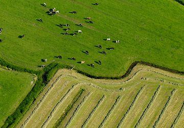 Weilanden met koeien, slootjes en vers en gemaaid gras geven een grafisch beeld van Sky Pictures Fotografie