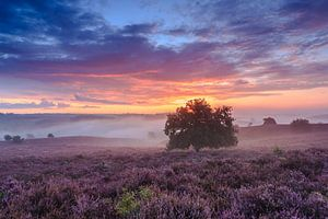 Het landschap van de Posbank tijdens zonsopkomst van Dave Zuuring